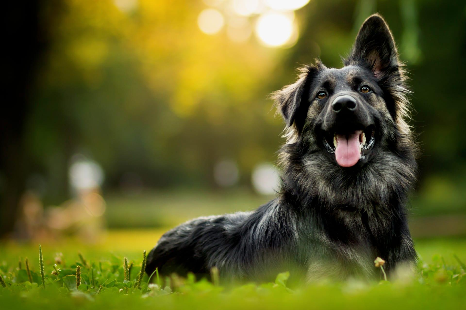 Feriehunden, hundepensjonat